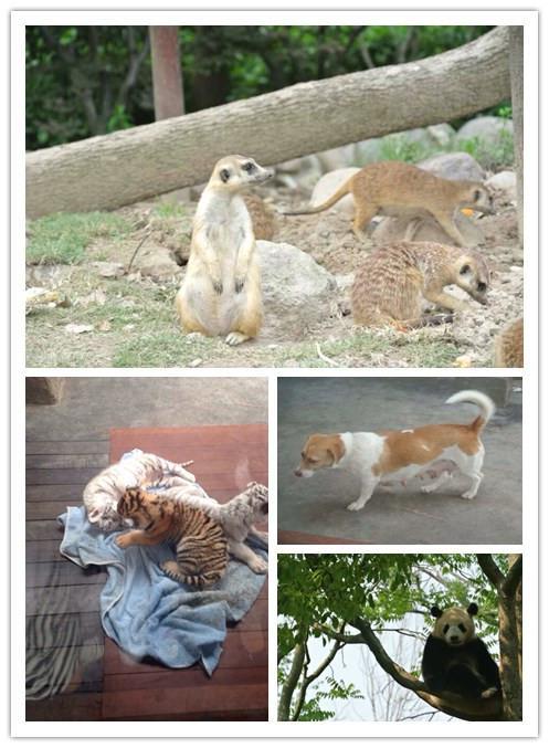 野生动物园 - 内容 - 徐汇区实验小学网站